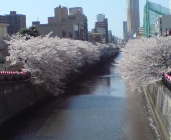 目黒川2011.jpg